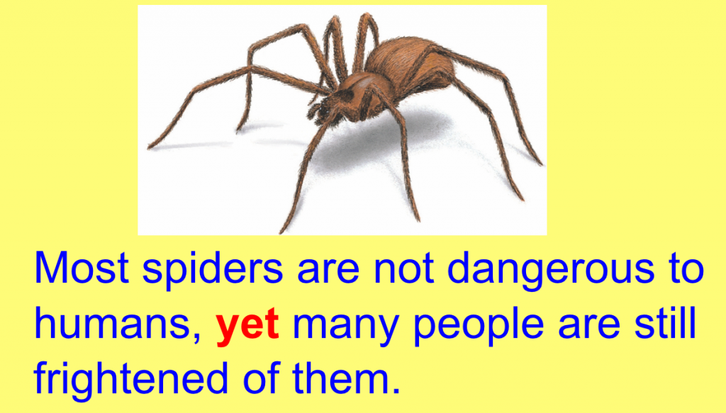 spider conjuction